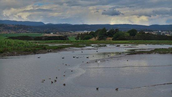 Riverside, Australia: Wetland birds in the river