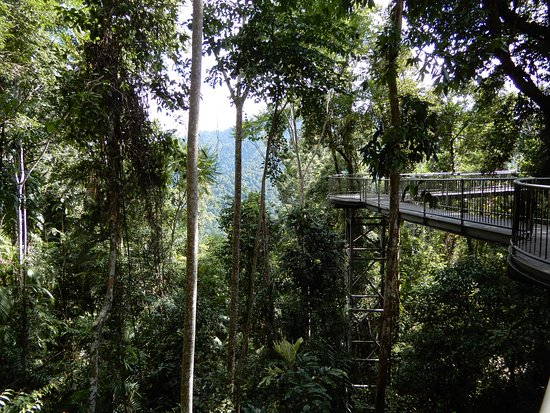 Mamu Tropical Skywalk: Skywalk
