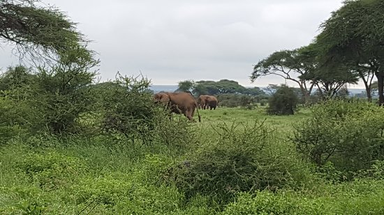 Kibo Safari Camp-billede