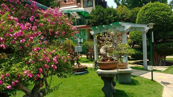 Superb Collection Of Vintage Bonsai Plants From All Over The World Reviews Photos Kishkindha Molika Bonsai Garden Tripadvisor