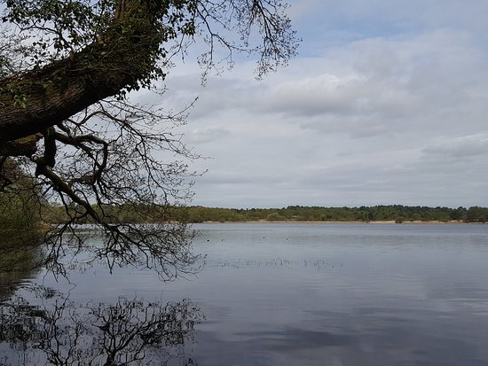 Frensham, UK: pondside view