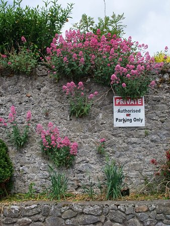 Fethard Medieval Walls: Part of a ruined wall in Fethard