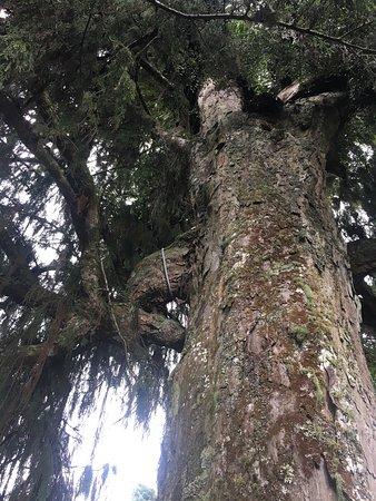 Rotorua Canopy Tours: photo5.jpg
