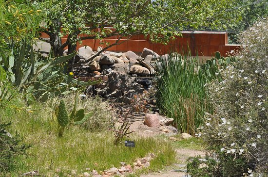 Rodeo, NM: So much to see in the desert garden, flora, fauna, unusual desert animals too.