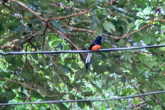 Dhilip De Alwis: Look at that tail!