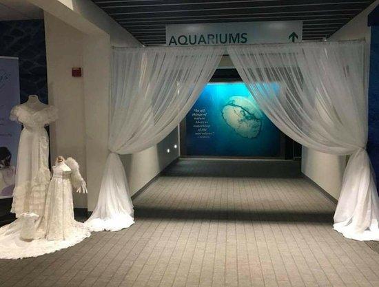 Virginia Aquarium & Marine Science Center: FB_IMG_1525137900488_large.jpg