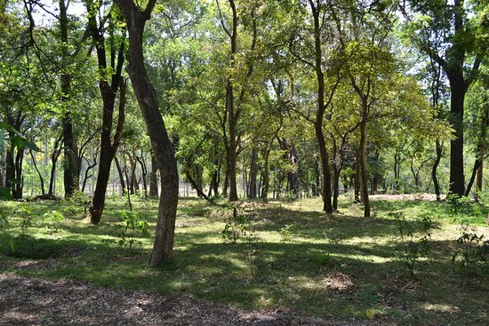 Sandalwood forest - Picture of Marayoor Sandalwood Forest, Marayur