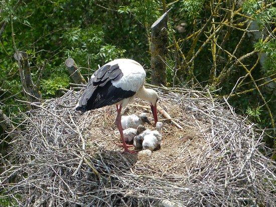 Le Parc des Oiseaux : Vue prise avec le zoom depuis la Tour