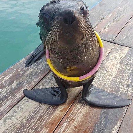 Seals Show