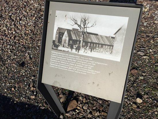 Gedenkstätte Buchenwald: かつてのGoethe Oakの写真