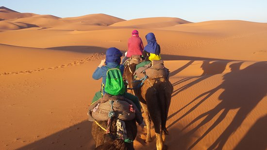 Camels House: On the Camels
