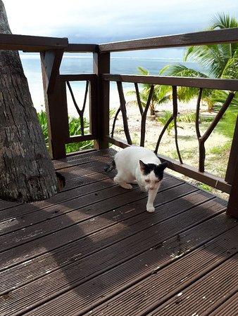 Paradise Cove Lodges: 20180426_152355_large.jpg