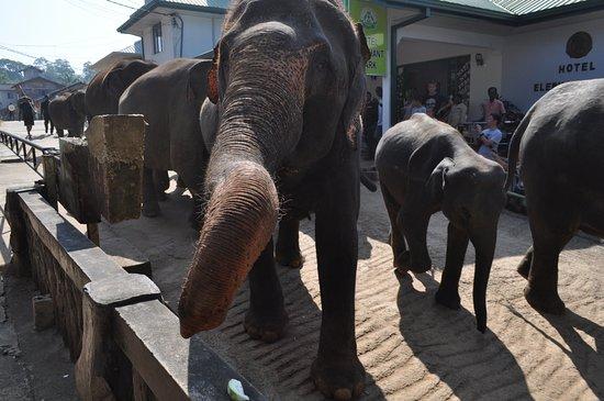 Hotel Elephant Park : 象さん移動中