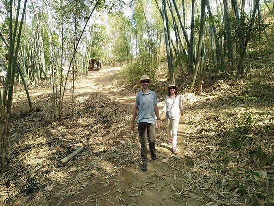 Pindaya, Myanmar: Walking along Bamboo Forest