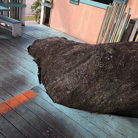 Indigo Coastal Shanty: photo2.jpg