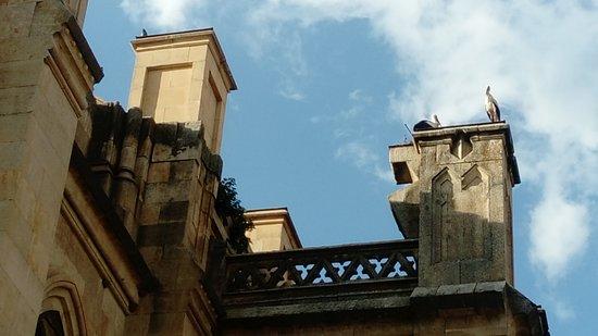 Basilica de Santa Teresa: Nido de cigüeñas