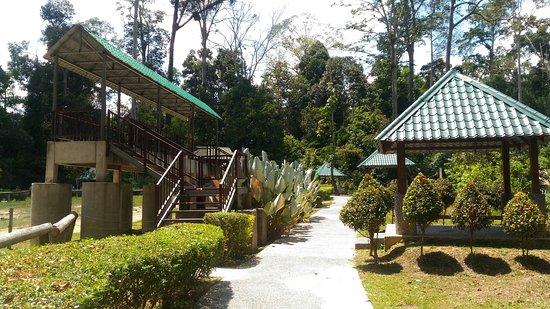 بهنج, ماليزيا: Kuala Gandah Elephant Sanctuary