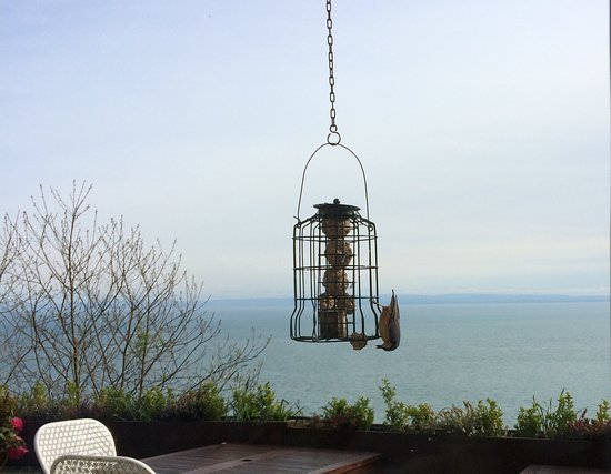 Chough's Nest Hotel: Watching a nuthatch feeding while we ate Breakfast