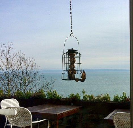 Chough's Nest Hotel: Another pic of the nuthatch feeding