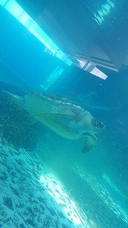 Mote Marine Laboratory and Aquarium : 20180430_115808_large.jpg