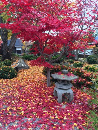 Nikkei Internment Memorial Centre: Autumn leaves make for beautiful images at the NIMC
