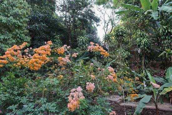 Kyaikto, Myanmar: Fleurs du jardins