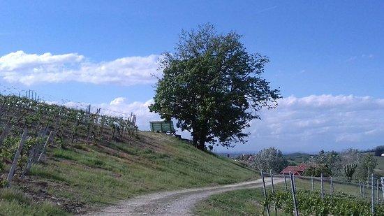 Fontanile, Italy: Agriturismo Bastian