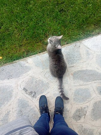 Invorio, Italy: One of the two resident cats