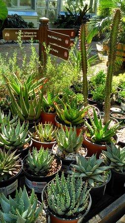 Stellenbosch University Botanical Garden: Cactus