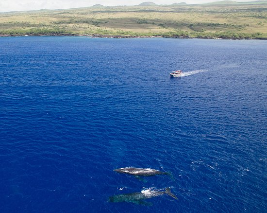 Kailua-Kona, HI: Ask for the Wildlife Guaranteed snorkel cruises, see dolphins, turltes or whales or come again f