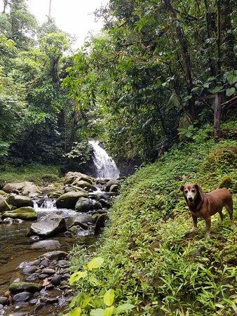 Провинция Лимон, Коста-Рика: Franklin el perrito nos acompañó al rio de la finca