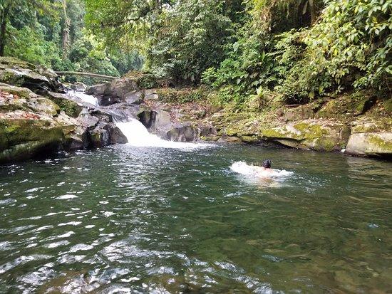 Provincia di Limon, Costa Rica: se puede nadar en el rio, pero el agua es buen frio!