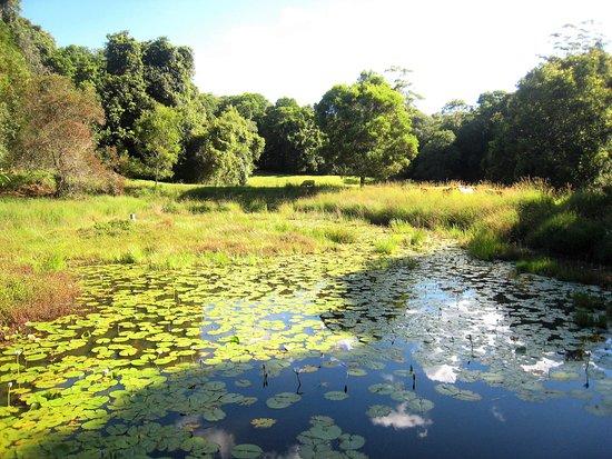 Moreton Bay Region, Australia: Along the creek