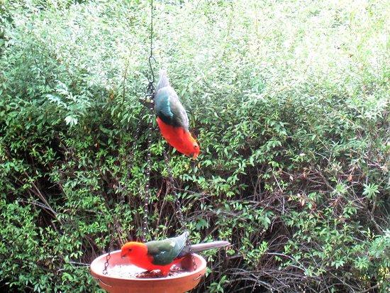 Moreton Bay Region, Australia: Plentiful birdlife
