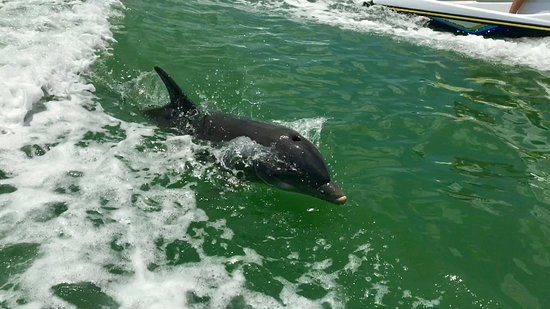 Florida Adventures and Rentals: Dolphin at play!