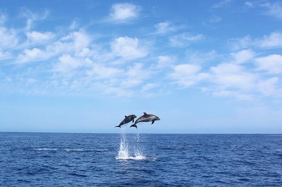 Whale and Dolphin Watching Tour in...
