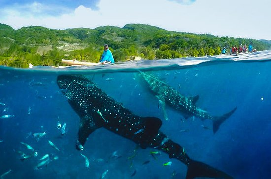 Canyoneering with Whaleshark Viewing...
