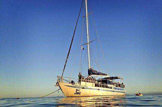 Coral Sea Dreaming: Overnight Dive...