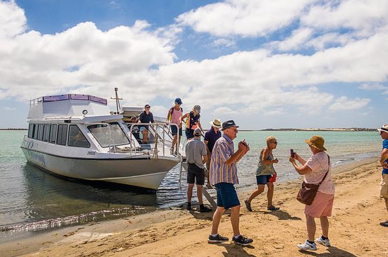 Coorong Discovery Cruise Including...
