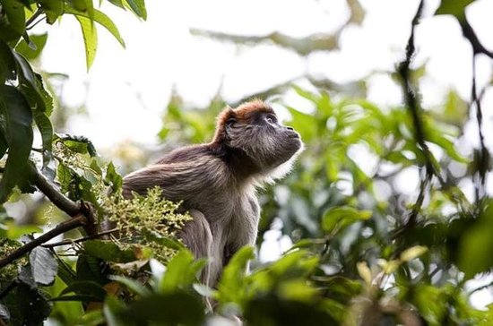 8-Day Murchison Falls, Chimp and Epic...
