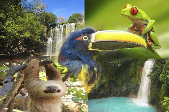4 IN 1 SLOTH WATER FALLS RAIN FOREST...