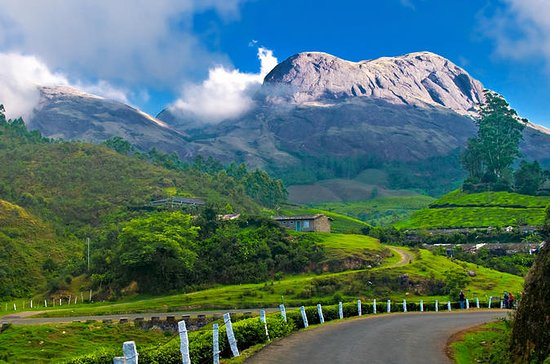 Private Custom Tour: Munnar local...
