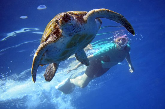 Snorkelling with turtles by kayak