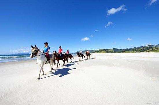 Private Tour: Beach Horse Riding...