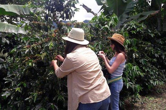 Coffee Tour in the beautiful Jardin...