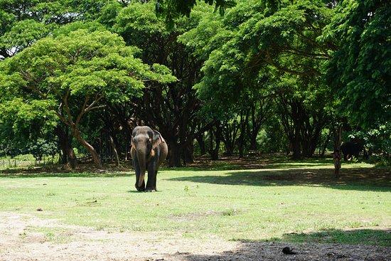 Inthanon Elephant Sanctuary & Wildlife Preserve