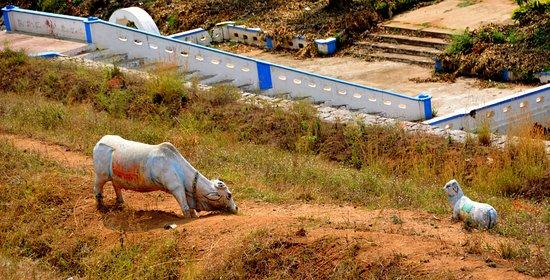Hogenakkal, India: View from dam top