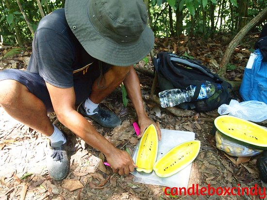 Bukit Lawang Guide: Our guide Zanet preparing fruits