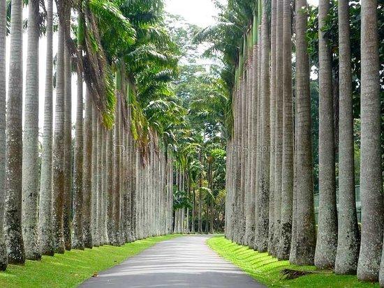 Kundasale, Sri Lanka: Royal Botanical Gardens, 30 minute drive.