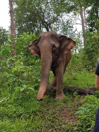 Sayaboury, Laos: IMG-20180430-WA0043_large.jpg
